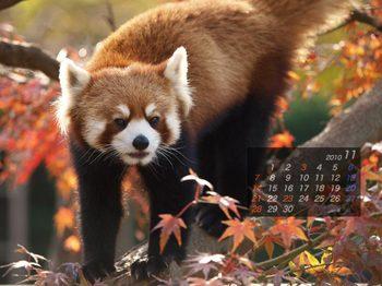 Panda1011_rr
