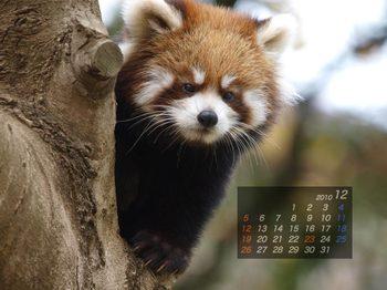 Panda1012_ei