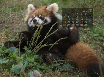 Panda1012_ko