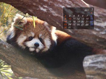 Panda1101_az