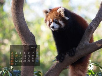 Panda1101_dz