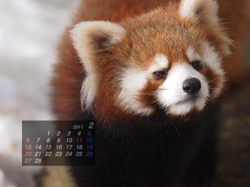 Panda1102_ff