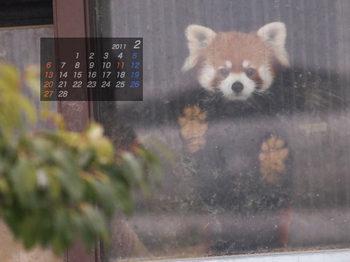 Panda1102_mi