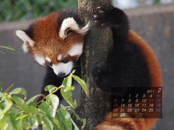 Panda1102_mm