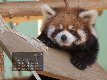 Panda1014_ei