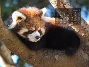 Panda1014_ko
