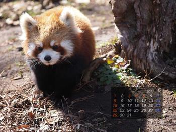 Panda1105_aq