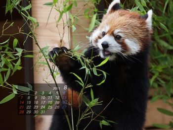 Panda1108_mm