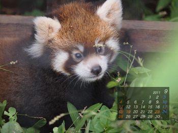 Panda1109_20