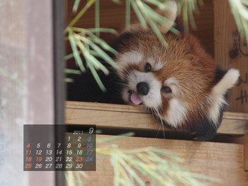 Panda1109_mm