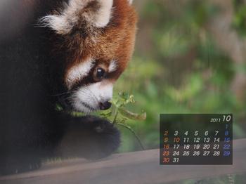 Panda1110_20