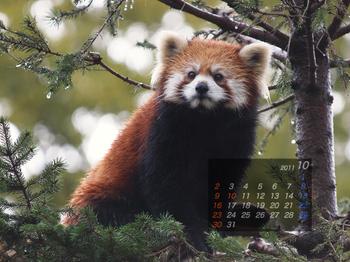 Panda1110_mm