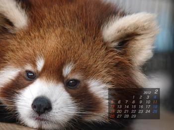 Panda1202_10
