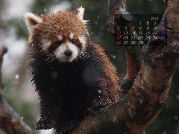 Panda1202_ei