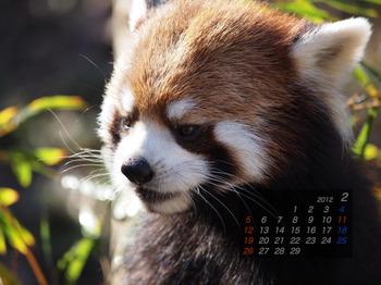 Panda1202_ko