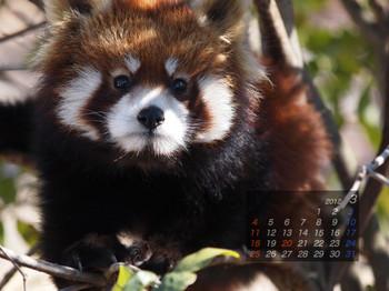 Panda1203_20