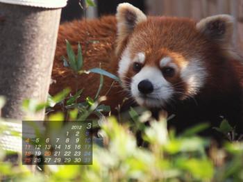 Panda1203_ff