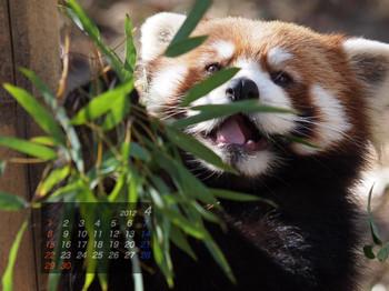 Panda1204_ei