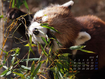 Panda1204_ko
