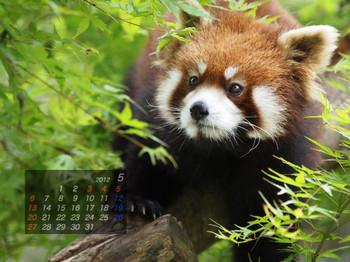 Panda1205_20