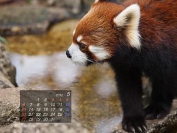 Panda1205_me