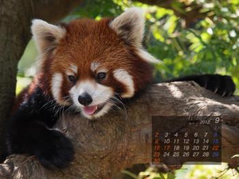 Panda1209_20