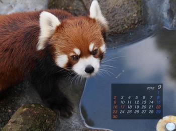 Panda1209_me