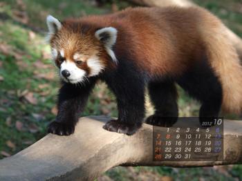 Panda1210_kt