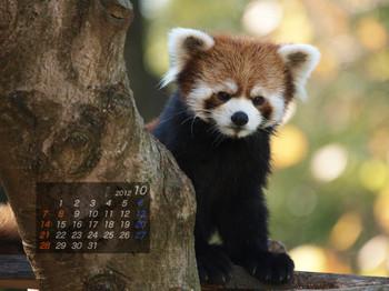 Panda1210_tt