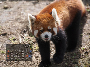 Panda1211_20