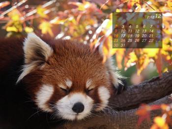 Panda1212_20