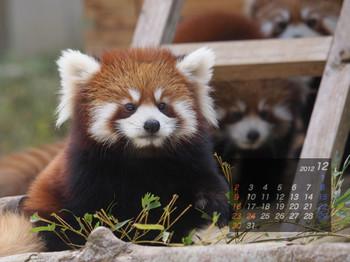Panda1212_fn