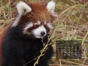 Panda1212_gt