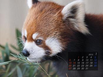 Panda1301_mi
