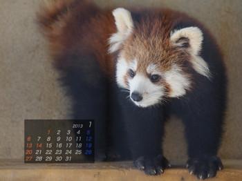 Panda1301_ss