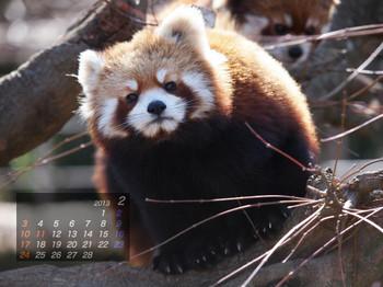 Panda1302_aq