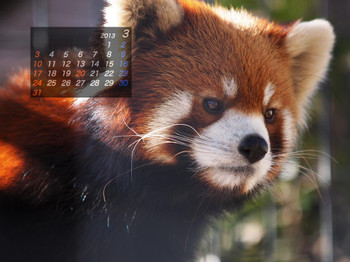 Panda1303_10
