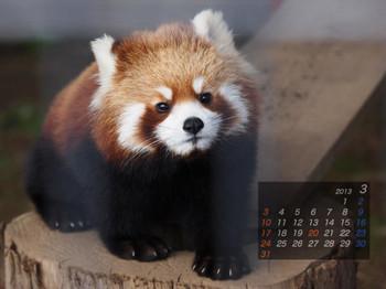 Panda1303_aq