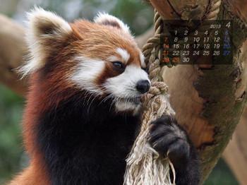 Panda1304_fn