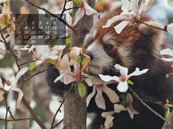 Panda1304_gt