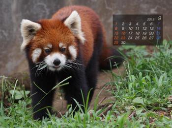 Panda1309_20