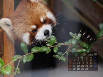 Panda1310_aq