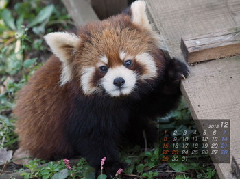 Panda1312_mt