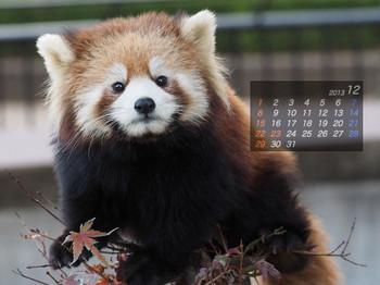 Panda1312_rf