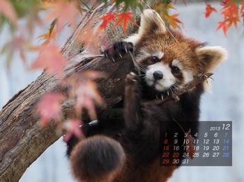 Panda1312_yf