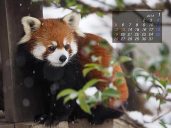 Panda1401_mi