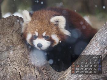 Panda1401_mk