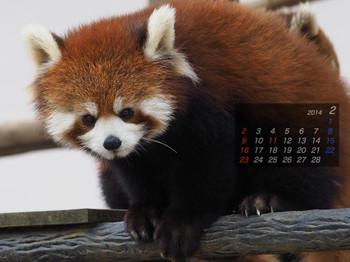 Panda1402_ee