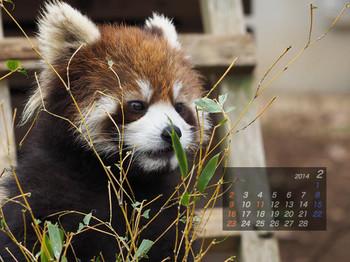 Panda1402_yy