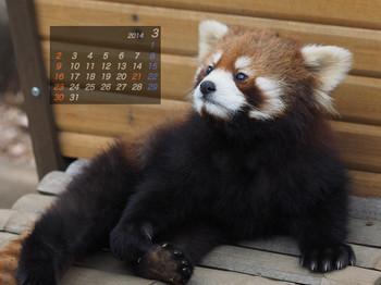 Panda1403_mt